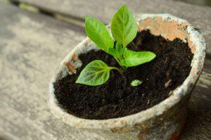 Ziemia ogrodowa zadba o piękno roślin w ogrodzie